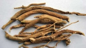 The Benefits & Uses of Ashwagandha
